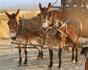 Mule wagon 2